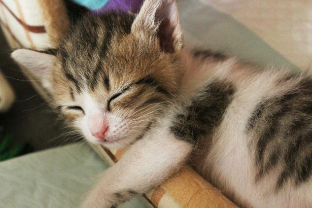 適正な睡眠時間